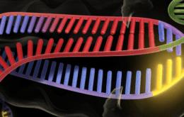 Cartoon representation of CRISPR-Cas9 bound to RNA and DNA