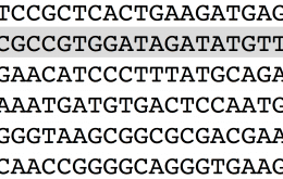 Sequence of DNA letters