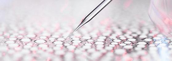 "New BBC Radio 4 series ""FutureProofing"" investigates emerging biotechnology - Innovative Genomics Initiative (IGI)"