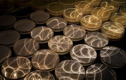 Petri dishes with light patterns reflecting on their lids