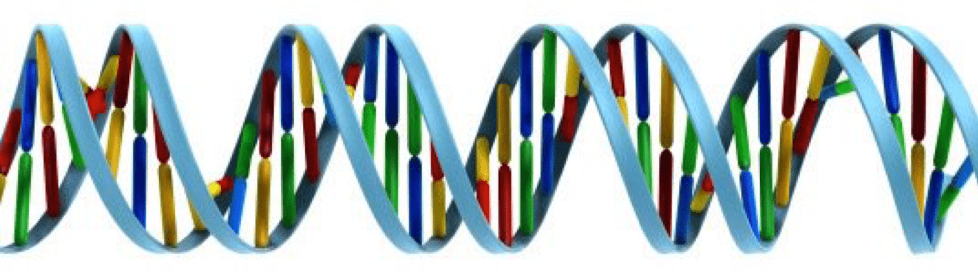 Cartoon representation of DNA with coloured bases