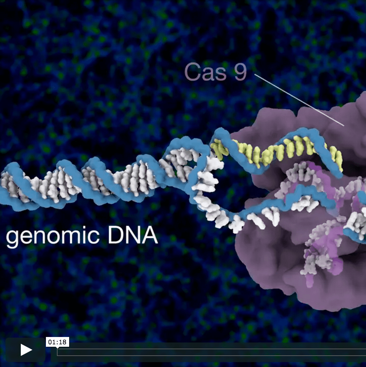 Cartoon of CRISPR-Cas9 cutting DNA