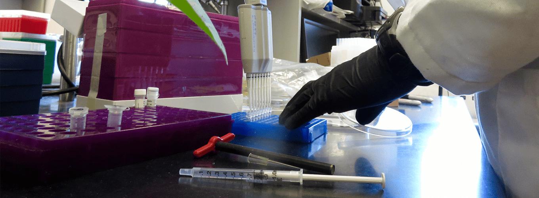 Scientist using a multi-channel pipette