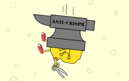 Comic showing the effect of anti-CRISPRs on the Cas9 protein