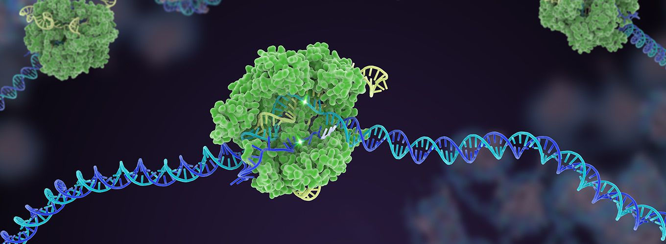 A structurally-accurate depiction of sgRNA-guided Cas9 protein cleaving its DNA target