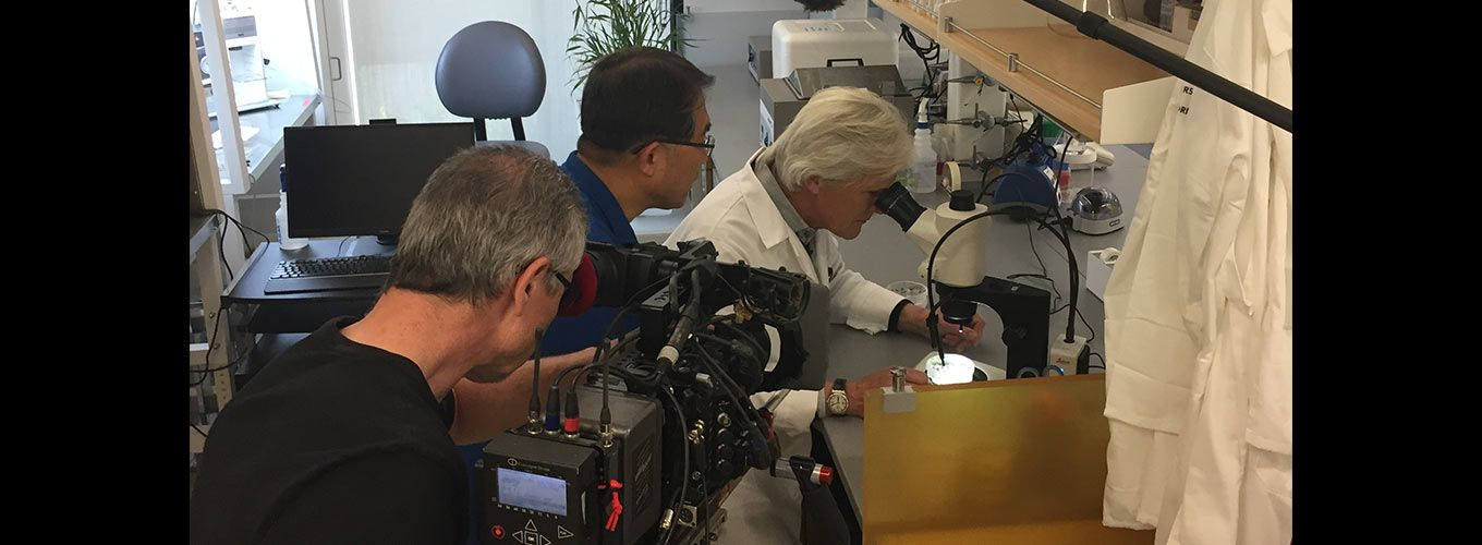 NBC's Keith Morrison checks out the IGI's latest plant gene editing work with Myeong-Je Cho at UC Berkeley
