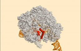 Cas9 inhibited by an anti-CRISPR protein that mimics DNA