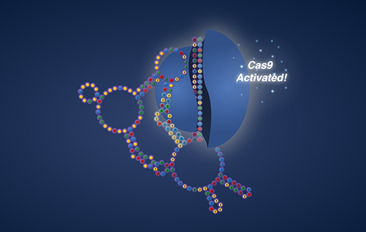 Cas9 activation animation from Eterna's OpenCRISPR puzzle