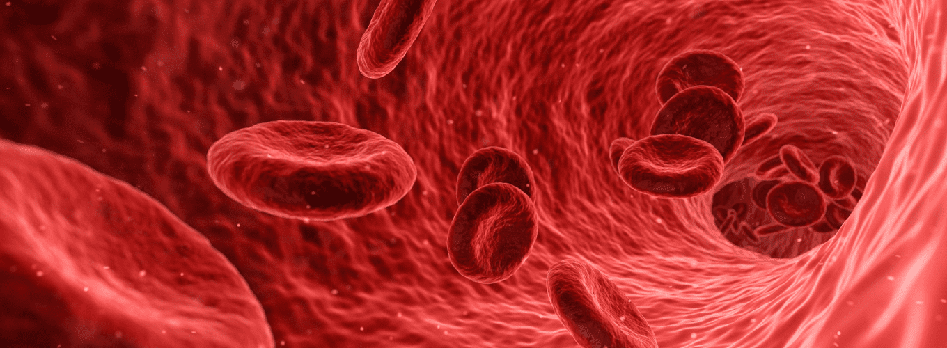 Red blood cells floating through artery