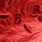 Red blood cells flowing through a vein