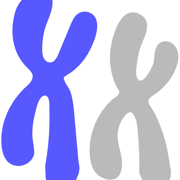 Image of a blue chromosome