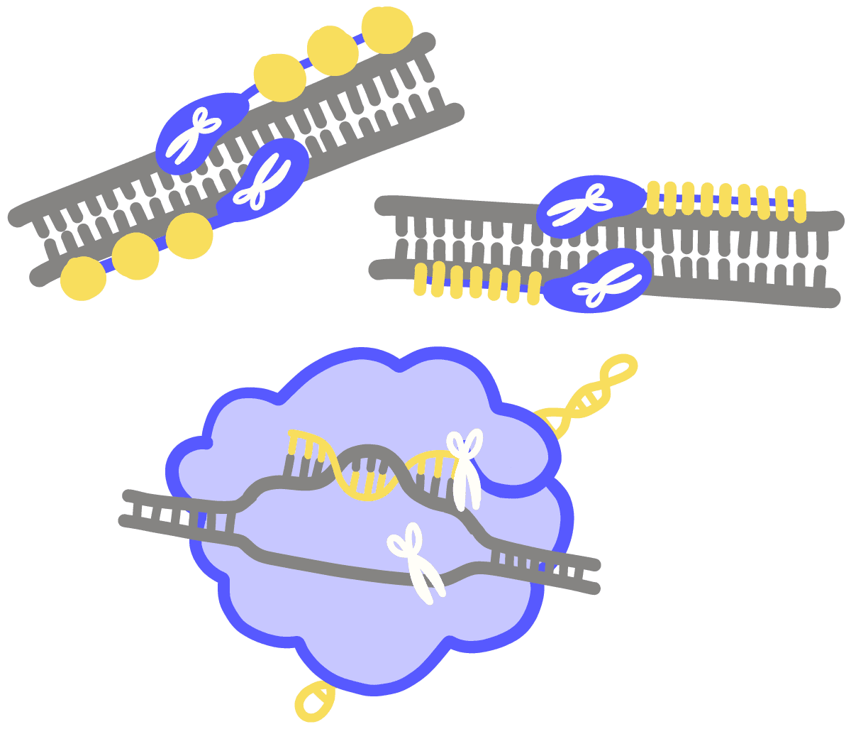 Image result for Genome Editing