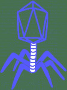 Image of a blue phage