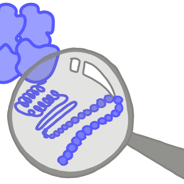 Image of a blue protein showing its secondary and primary structures under a magnifying glass.