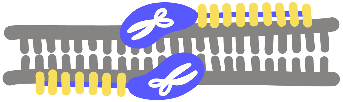 Image of transcription activator-like effector nucleases