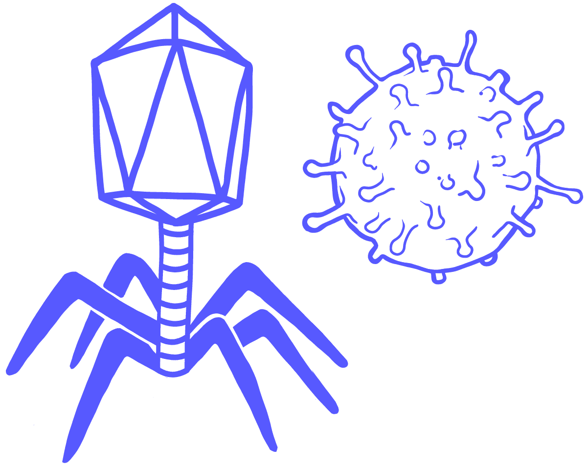 Image of two viruses. A complex virus and a spherical virus.