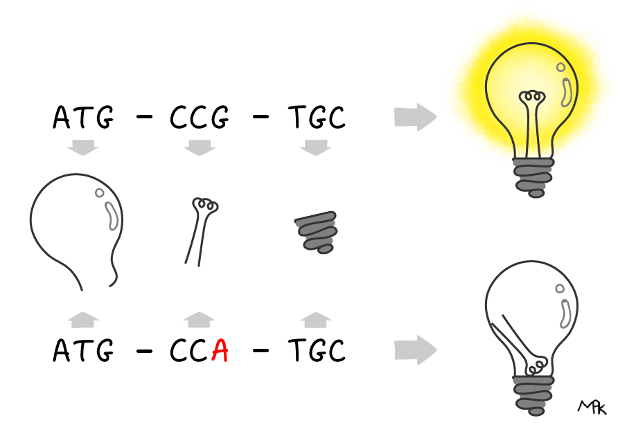 Diagram comparing silent DNA mutations to errors in assembling a lightbulb