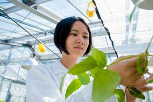 Yunru Peng holding a soybean plant