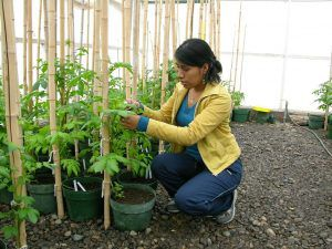Benny Julissa Ordonez Aquino growing a plant in a greenhouse