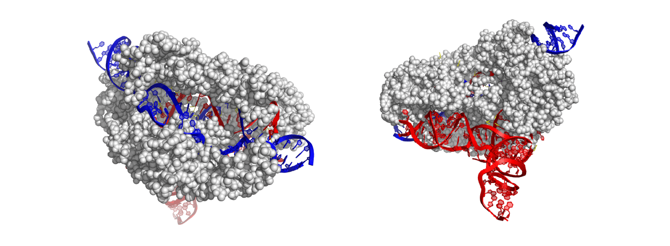 EM structure of CasX enzyme at different angles
