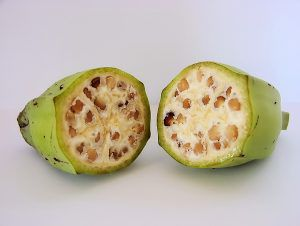 A wild-type banana cut into a cross-section to expose its large seeds.