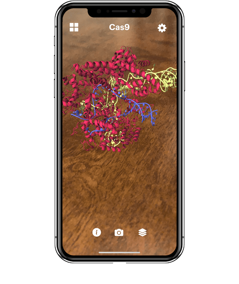 Augmented reality structure of the CRISPR-Cas9 protein shown on a cell phone screen.