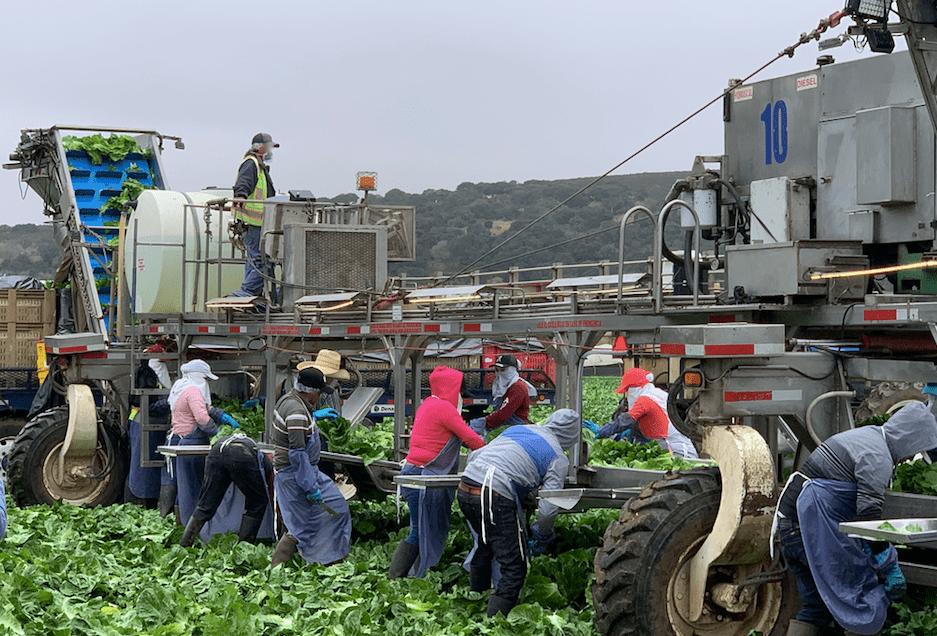 Farmerworkers in Monterey county