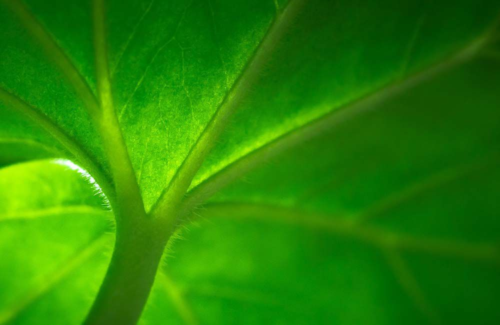 The plant nuclear envelope is a tissue associated with multiple genetic disorders