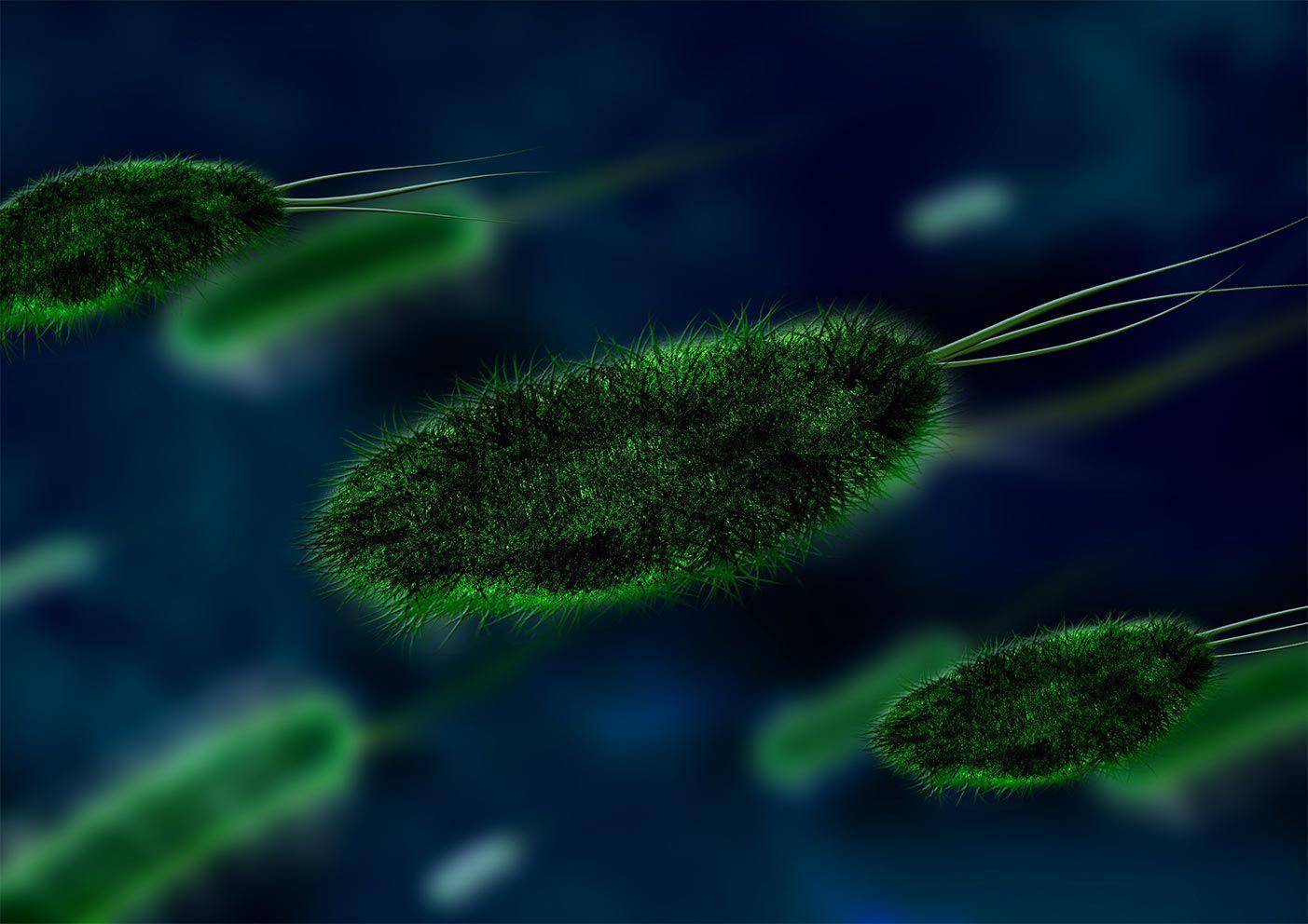 3D rendering of E. coli