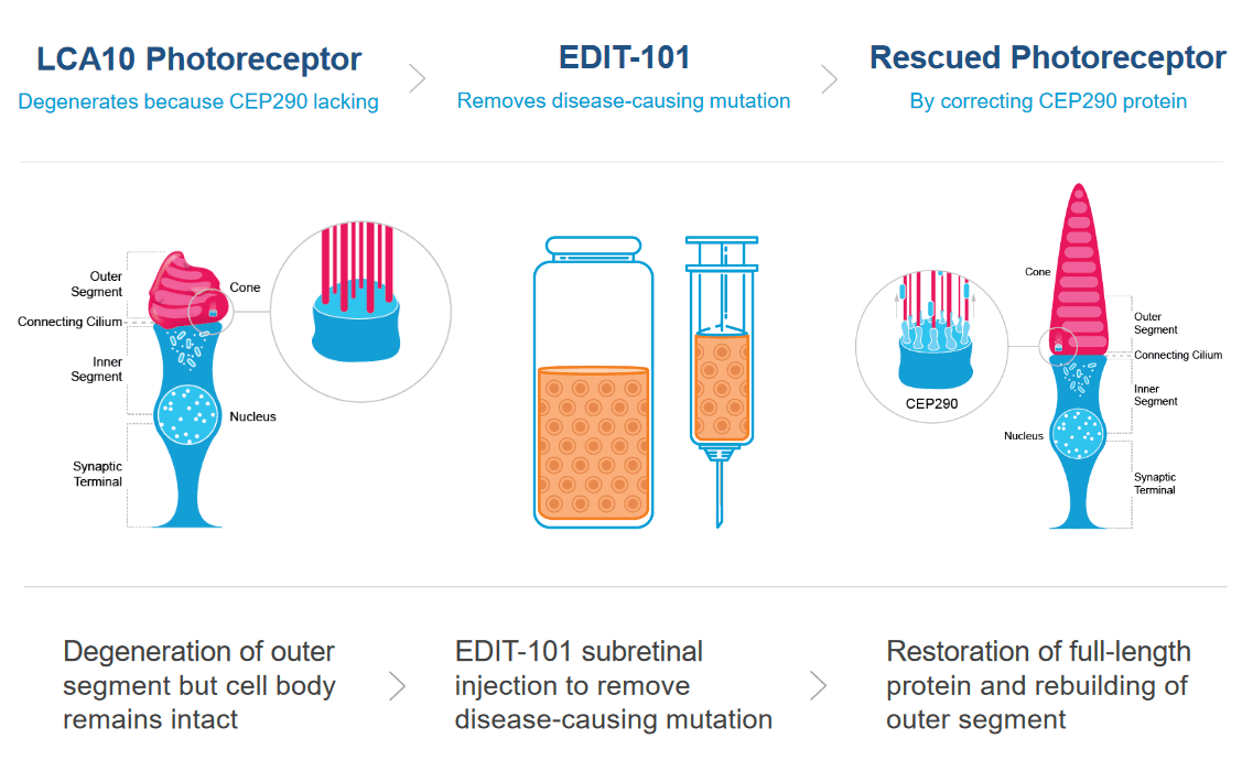 schematic of LCA10 treatment
