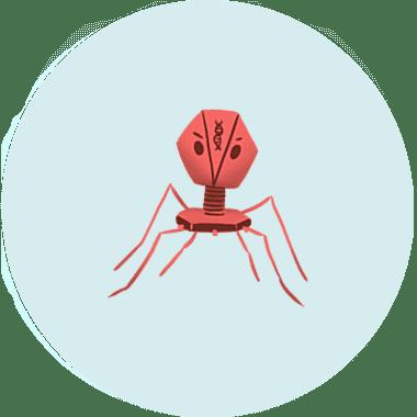 Illustration of a phage