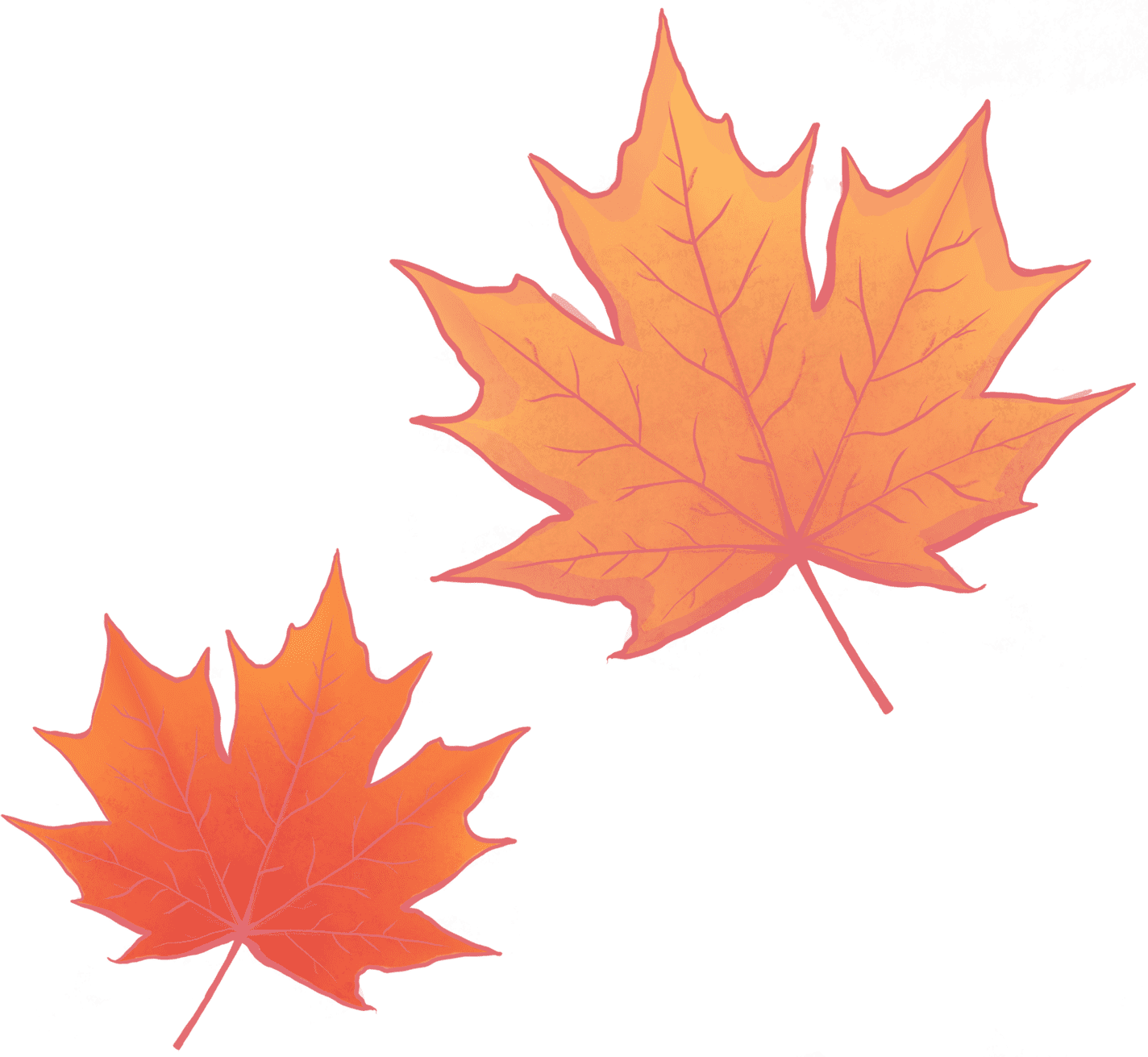 Illustration of two maple leaves