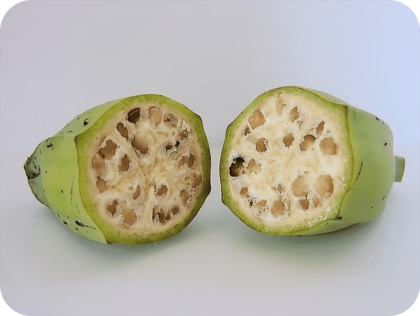 photo of a wild banana cut in half, showing lots of seeds