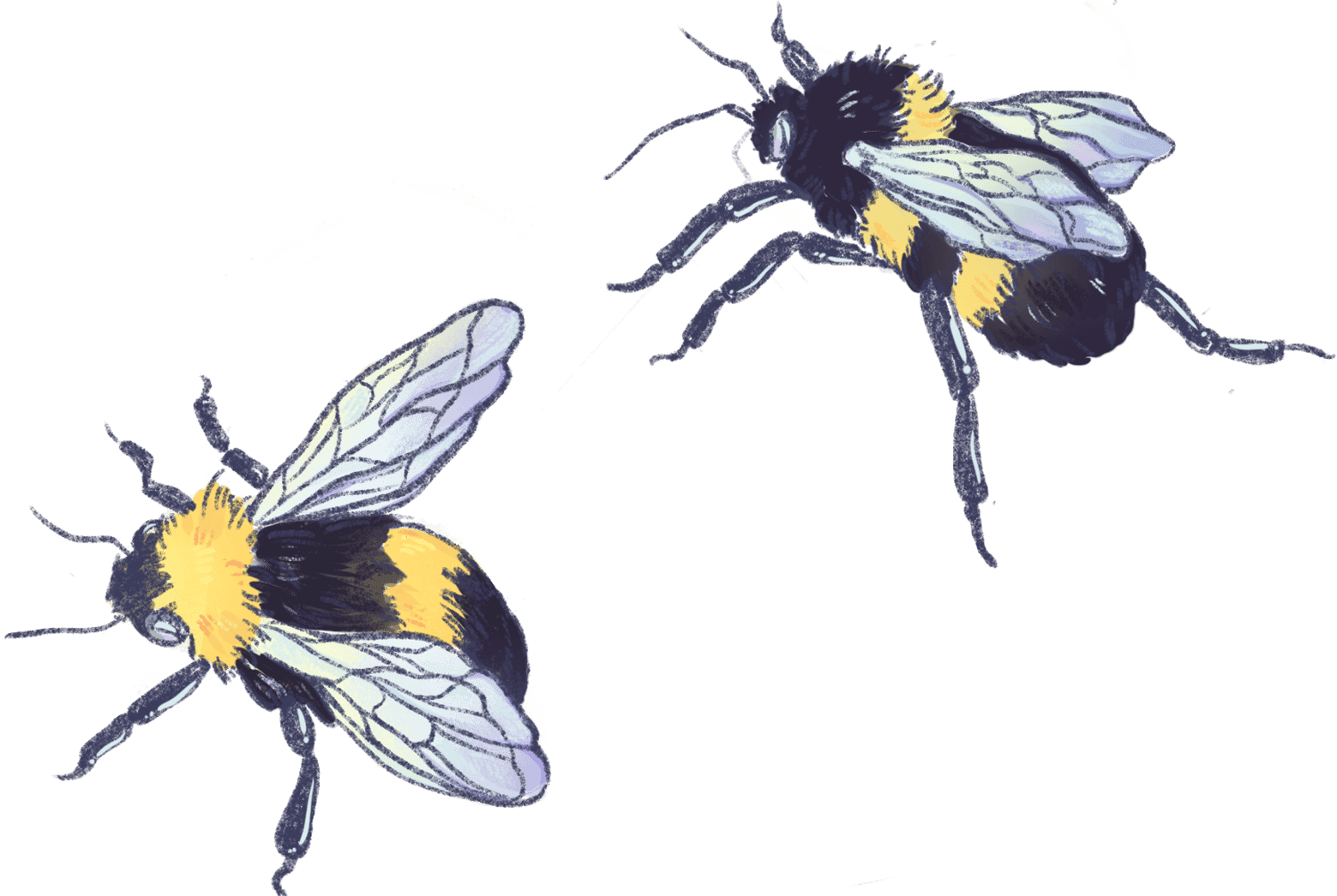 Illustration of bees
