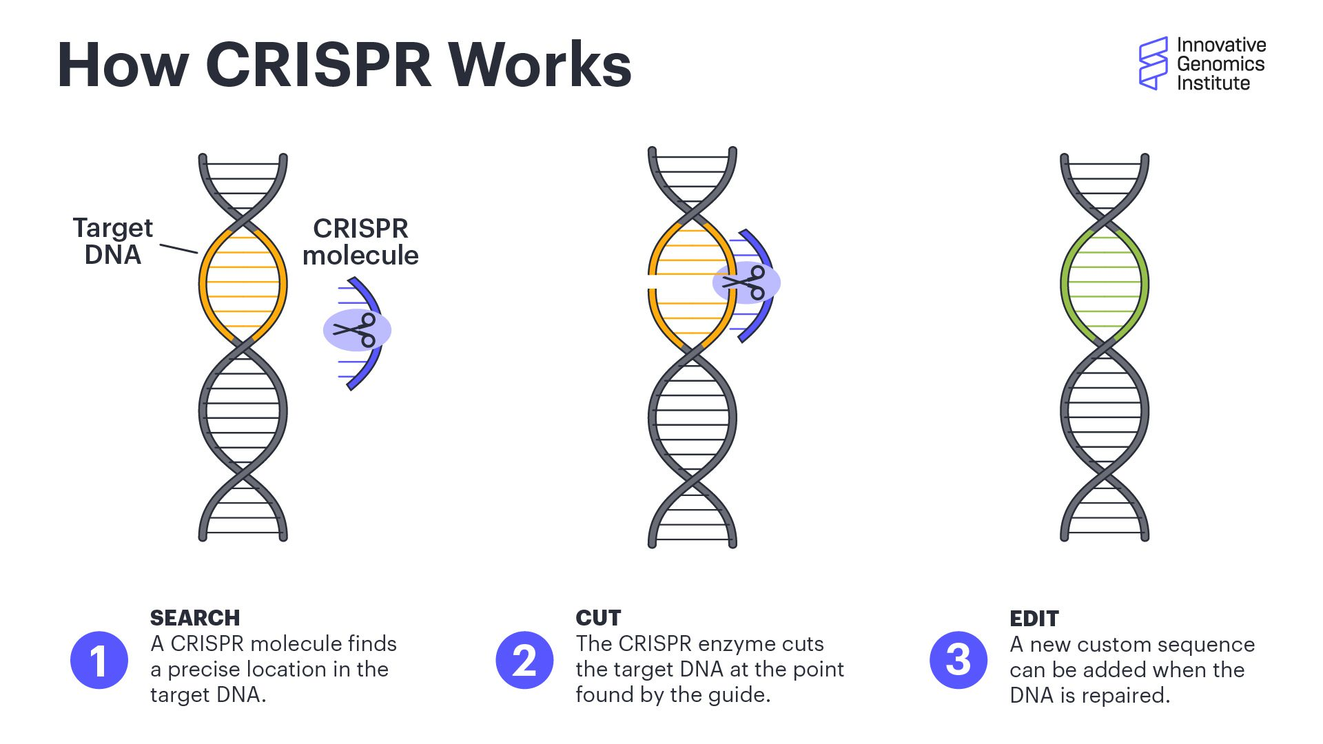 How CRISPR Works illustration