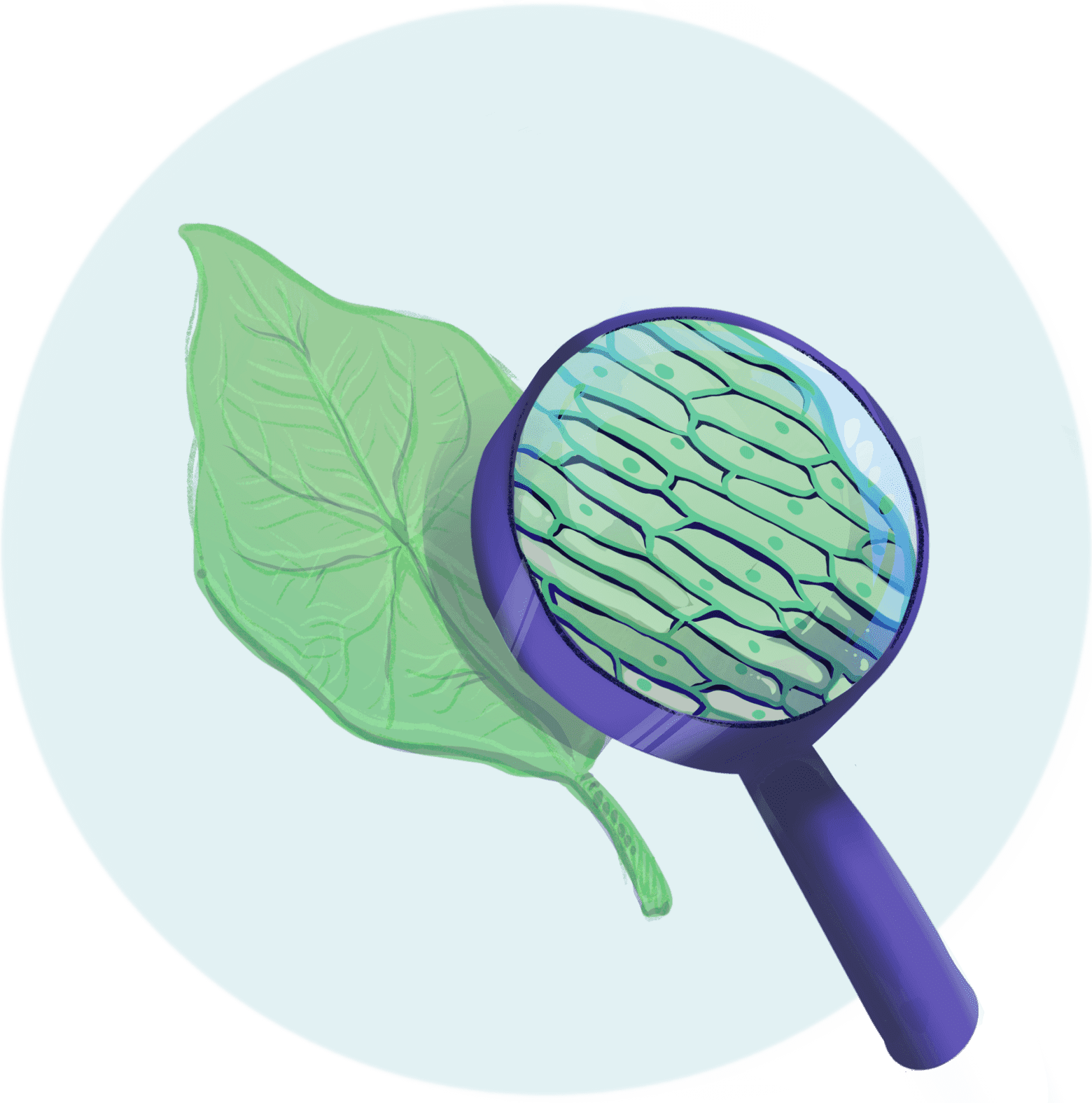 Illustration of magnifying glass showing the individual cells of a leaf