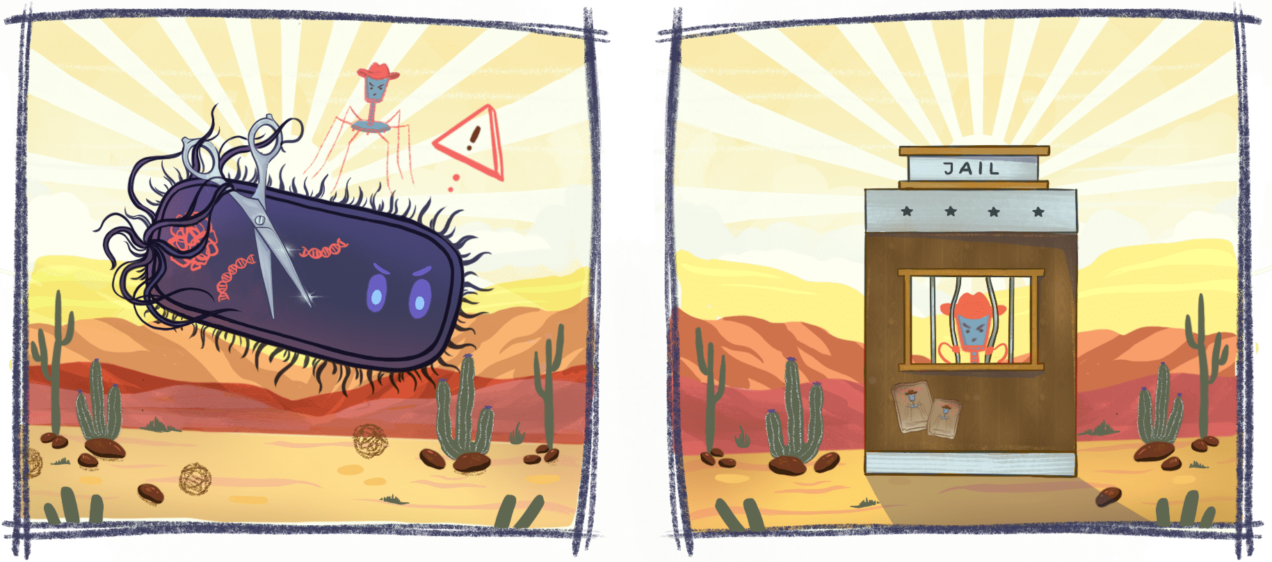 Illustration of an angered E. Coli bacterium and a bacteriophage in a cowboy hat above it. The second illustration shows the bacteriophage in jail.